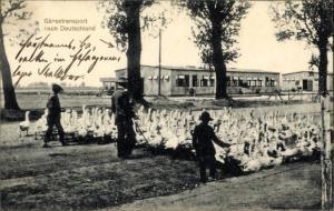 Ak Gänsetransport nach Deutschland, Kriegsgefangenenlager Russisch Polen