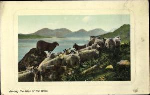 Ak Among the Isles of the West, Schafherde auf den Hebriden, Schottland