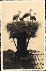 Foto Ak Storchennest auf einem Dach, Störche