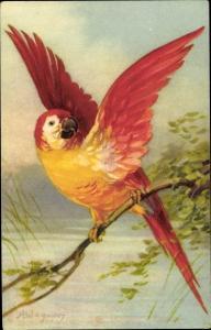 Künstler Ak Wagner, A., Roter Papagei auf einem Ast