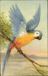 Künstler Ak Wagner, A., Blauer Papagei auf einem Ast