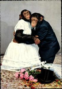 Ak Schimpansen in Brautkleid und Anzug, Hochzeit, vermenschlichte Tiere