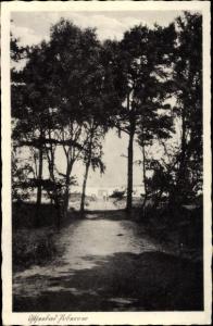 Ak Pobierowo Poberow Westpommern, Waldweg