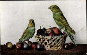 Ak Zwei Wellensittiche, Kirschen, Reklame, Finkenstedt's Vogelfutter, Lehrte