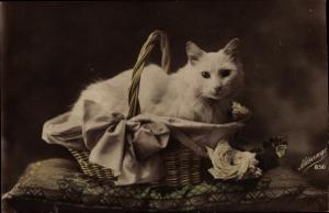 Ak Katze, Weißes Fell, Körbchen, Weiße Rose