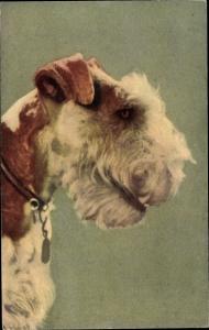 Künstler Ak Fox Terrier, Hundeportrait