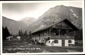 Ak Pertisau Eben am Achensee in Tirol, Alpengasthaus Plezach, Kühe