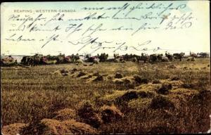 Ak Kanda, Reaping, Bauern bei der Getreideernte, Landwirtschaft