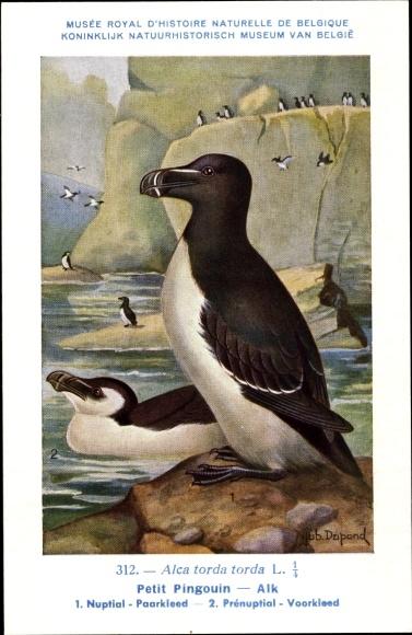 Künstler Ak Dupond, Hub., Petit Pingouin, Alk, Nr 312 0