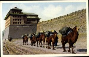 Ak Beijing Peking China, Camel Train
