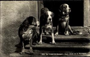 Ak St Bernard Sankt Bernhard Wallis, Drei Hunde auf einer Haustreppe