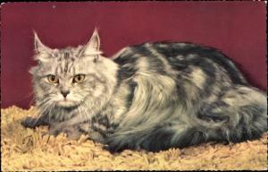 Ak Langhaarige Katze mit gelben Augen
