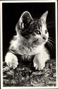 Ak Kleine getigerte Katze, Baumstamm