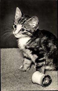 Ak Kleine getigerte Katze mit Garnrolle