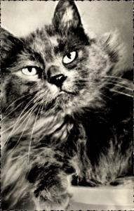 Ak Katze mit langem Fell
