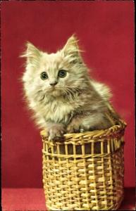 Ak Langhaarige Katze in einem Flechtkorb