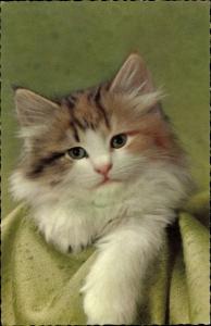 Künstler Ak Kleine orange Katze mit langem Fell