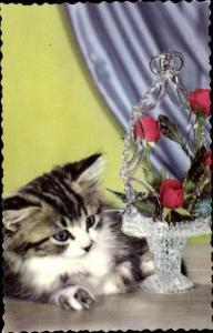 Ak Liegende getigerte langhaarige Katze, Rosen