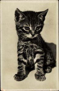 Ak Kleine getigerte Katze, Katzenbaby
