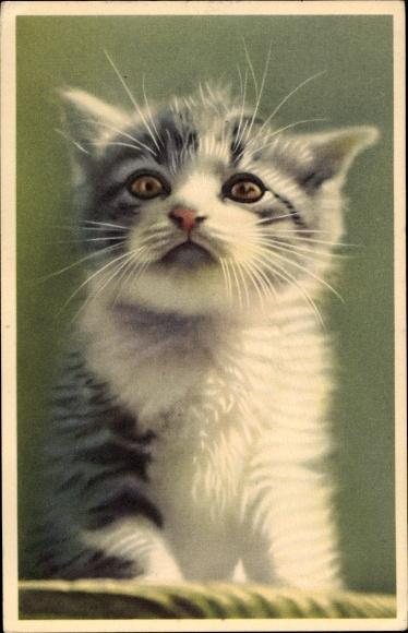 Ak Kleine weiß grau getigerte Katze 0