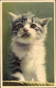 Ak Kleine weiß grau getigerte Katze