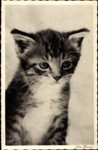 Ak Kleine getigerte Katze, Fotografin Lotte Herrlich
