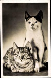 Ak Liegende getigerte Katze, sitzende schwarz weiße Katze