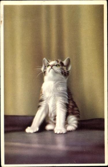 Ak Weiß braun getigerte Katze schaut in die Luft 0