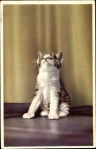 Ak Weiß braun getigerte Katze schaut in die Luft