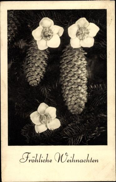 Ak Fröhliche Weihnachten, Tannenzapfen, Blüten 0