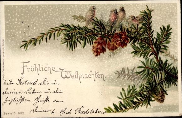 Ak Fröhliche Weihnachten, Rotkelchen auf Tannenzweig 0