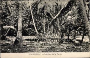 Ak Iles Gilbert Gilbertinseln Kiribati, Intérieur de la Forêt