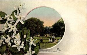 Passepartout Ak Tonga, Orange Groves, Orangenblüten