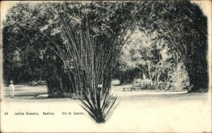 Ak Rio de Janeiro Brasilien, Jardim Botanico, Bambus