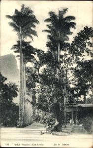 Ak Rio de Janeiro Brasilien, Jardim Botanico, Alea direita