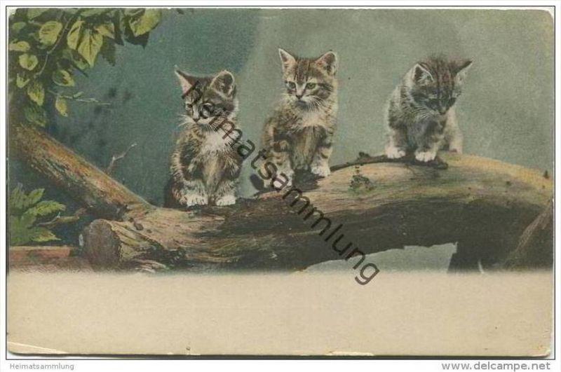 Katzen auf einem Baumstamm ca. 1900 - HSM 8047