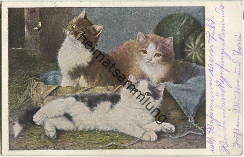 Drei Katzen - Feldpost