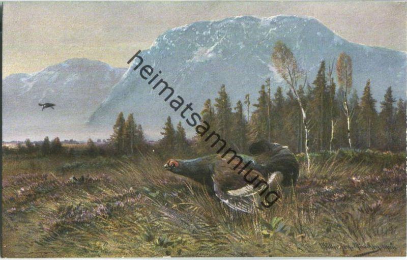 Jagd - Auerhahn - signiert Müller jun. München - Künstleransichtskarte ca. 1900 - coloriert