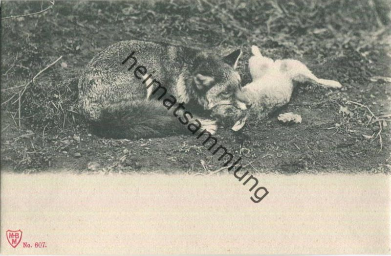 Jagd - Fuchs - Hase - Künstleransichtskarte ca. 1900