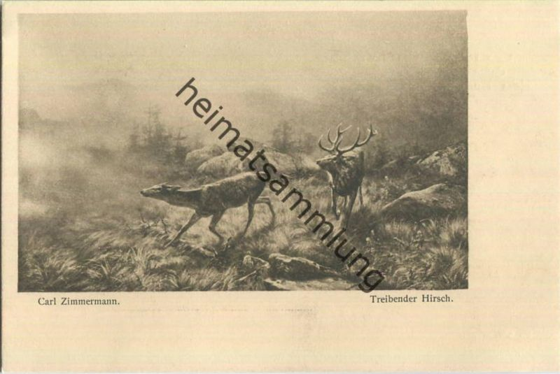 Jagd - Carl Zimmermann - Treibender Hirsch - Künstleransichtskarte ca. 1900