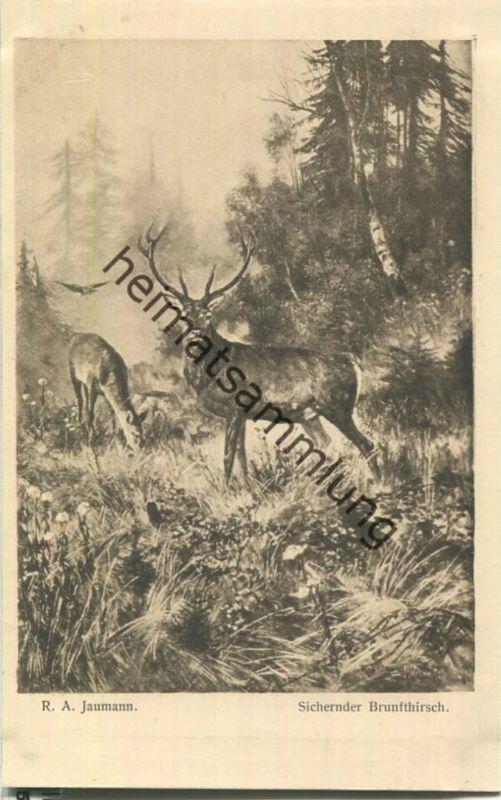Jagd - R. A. Jaumann - Sichernder Brunfthirsch - Künstleransichtskarte ca. 1900