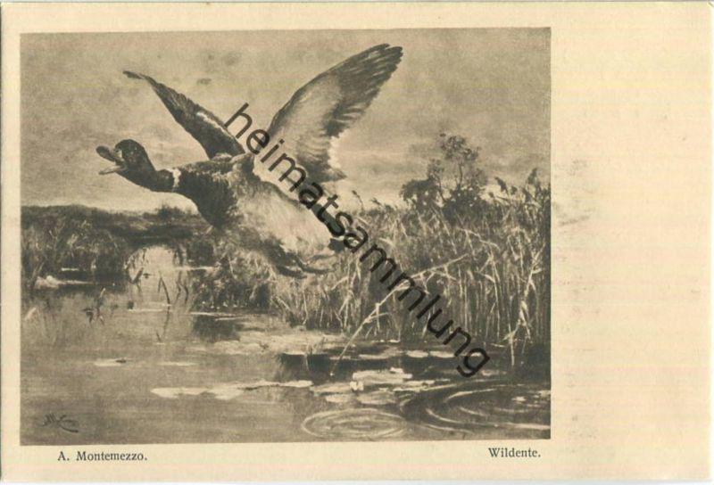 Jagd - A. Montemezzo - Wildente - Künstleransichtskarte ca. 1900