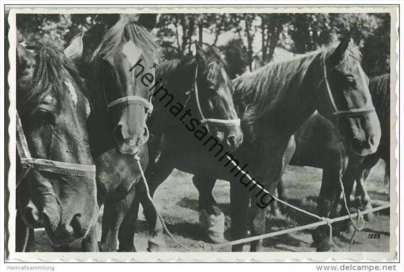 Pferde - Foto-AK - Militärpost