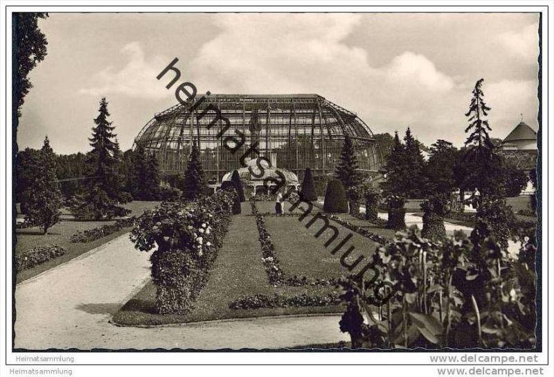 Berlin-Dahlem - Botanischer Garten - Foto-AK 50er Jahre