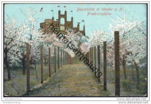 Werder - Baumblüte - Friedrichshöhe