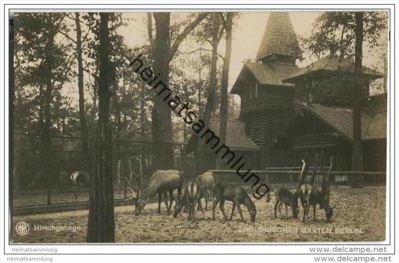 Berlin-Charlottenburg - Zoologischer Garten - Hirschgehege - Foto-AK - Verlag des Aktien-Vereins des zoologischen Garten