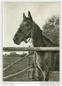 Pferd auf der Koppel - Erka-Foto