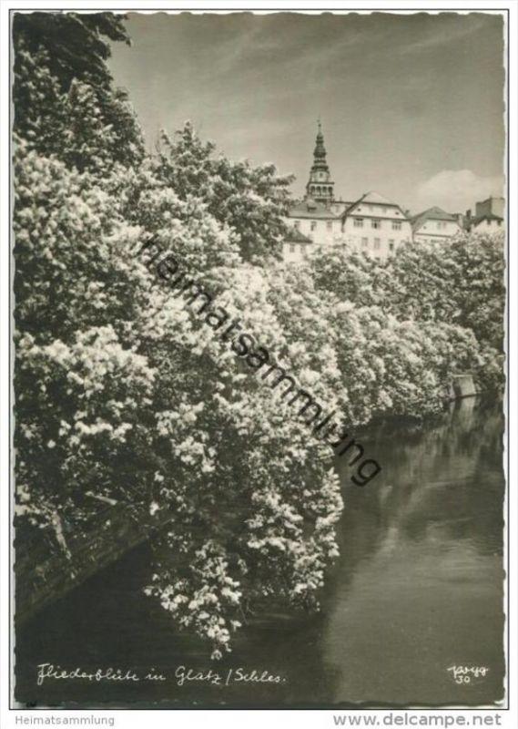 Fliederblüte in Glatz - Popp-Verlag Heidelberg - Einzelhandabzug