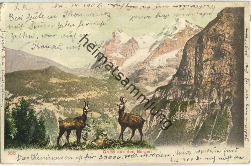 Gruss aus den Bergen - Gämsen