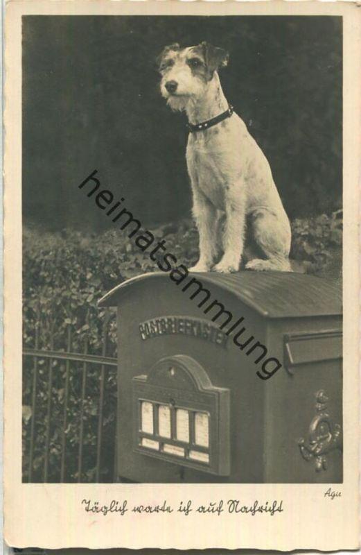 Hund auf dem Briefkasten - täglich warte ich auf Nachricht - Gunkel-Foto-Karte